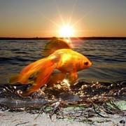 Золотая  Рыбка on My World.