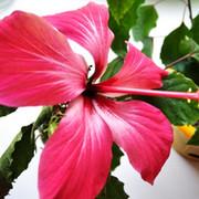 Лариса Петровна on My World.