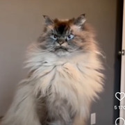 Наталья Колесникова on My World.
